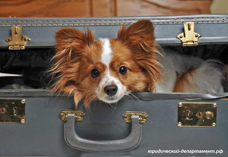 Собака, чемодан, собака в чемодане