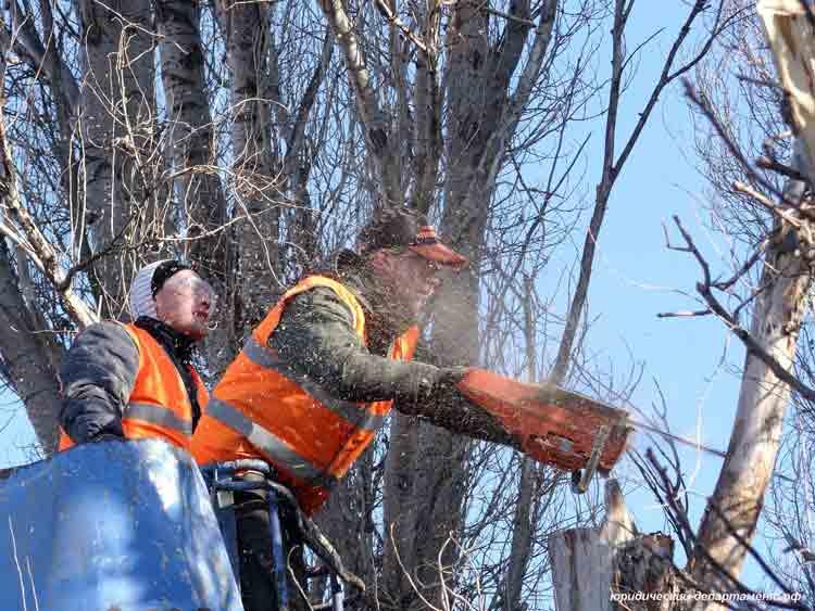 рабочие, жкх, пилить дерево