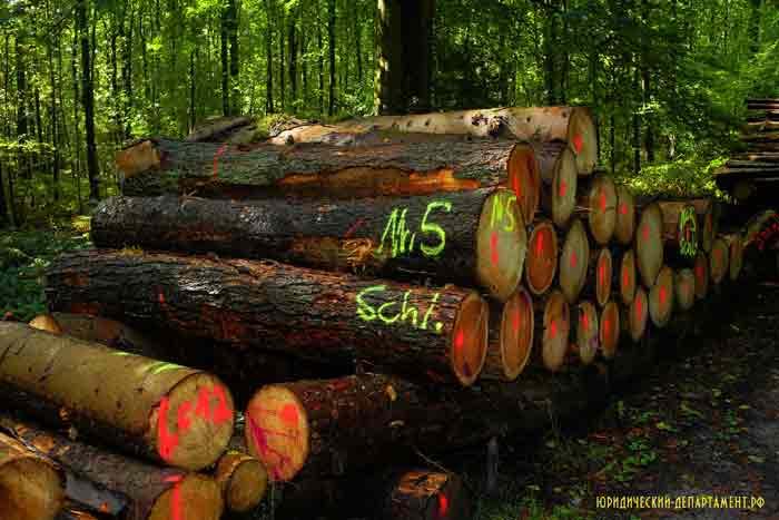 лес, дрова